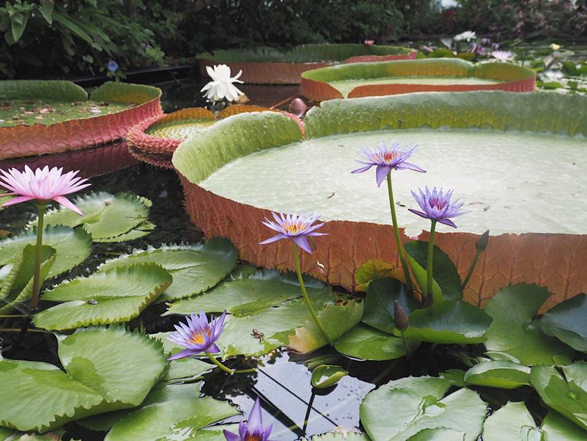 03_jardins_des_martels_tarn